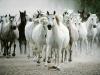 bogowie-konie2