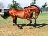 konie026
