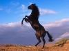 konie_21