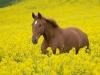 wies-piekne-konie-03-010